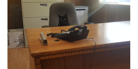 Check out our friendly and helpful office cat!  , Stuarts Draft, Virginia