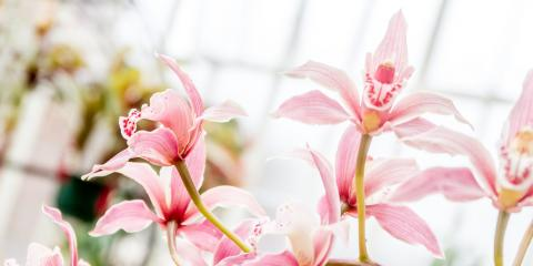 Hilo Plant Nursery Shares 4 Simple Tips for Orchid Care, Hilo, Hawaii