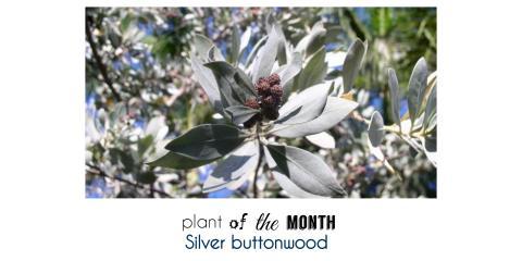 Plant of the Month, Brandon, Florida