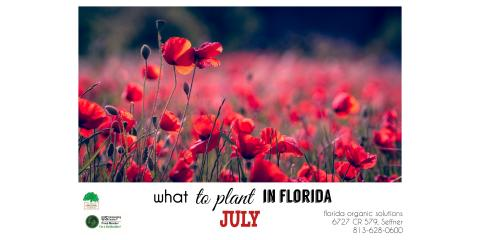 What to Plant in July in Florida, Brandon, Florida