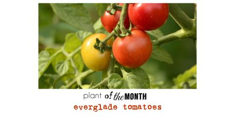 Plant of the month: JULY, Brandon, Florida