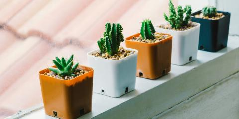 3 Tips To Caring For Your Indoor Cactus, Colerain, Ohio