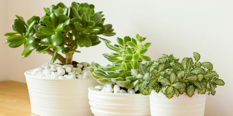 4 Easy Houseplants for Beginners, Fairfield, Connecticut
