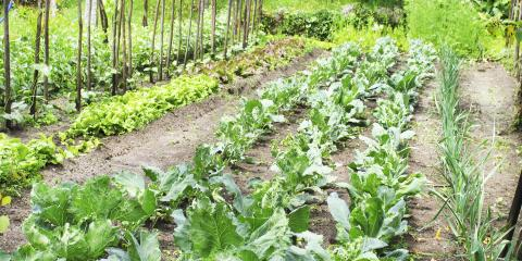 A Guide to Crop Rotation in Your Vegetable Garden, Anchorage, Alaska