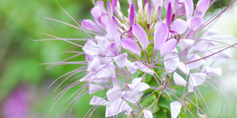 Refresh the Annuals in Your Garden With These 3 Plants, Plymouth, Minnesota