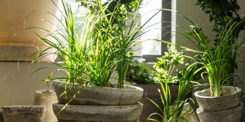 3 House Plants That Improve Indoor Air Quality, Plymouth, Minnesota
