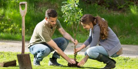 3 Things to Consider When Choosing a Tree For Your Yard From Maryland's Tree Care Experts, Beltsville, Maryland