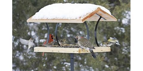 7 Basic Backyard Bird Feeders Series - #3, Platform Bird Feeders, Lincoln, Nebraska