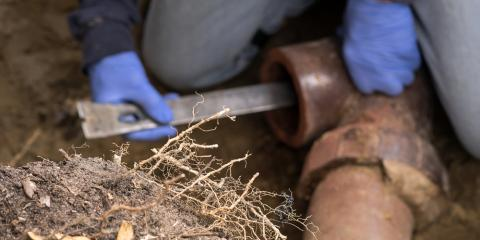 4 Ways to Remove Tree Roots in Sewer Systems From WI's Top Plumber, Wisconsin Rapids, Wisconsin