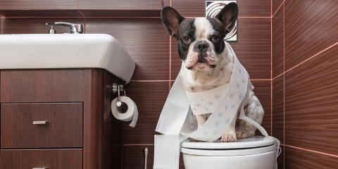 How to Keep Your Home's Plumbing Running Smoothly After Getting a Pet, La Crosse, Wisconsin