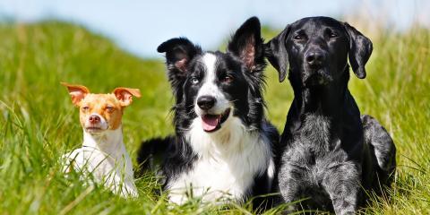 3 Ways to Protect Your Plumbing From Pet Problems, Lexington, Kentucky
