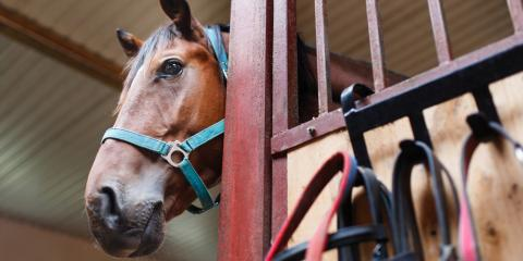 3 Tips for Preventing Barn Animal Escapes, Savannah, Tennessee