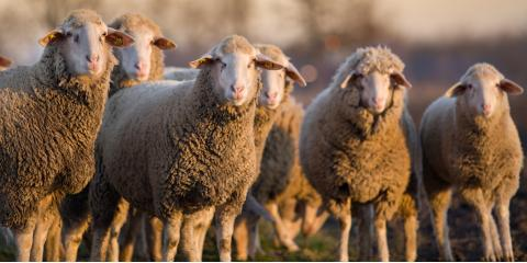 4 Ways to Increase Livestock Comfort in Cool Weather, Savannah, Tennessee