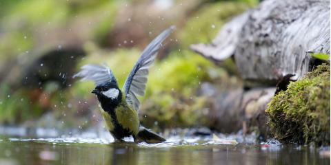 4 Ways a Pond Will Attract More Birds to Your Yard, East Bloomfield, New York