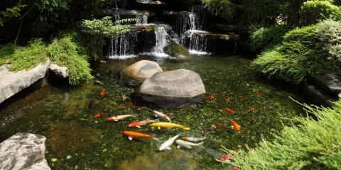 3 Essential Pond Maintenance Tips to Keep Your Fish Healthy, East Bloomfield, New York