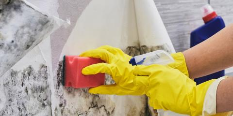 3 Reasons to Avoid DIY Mold Removal, Poplar Bluff, Missouri