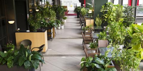 3 Incredible Ways Garden Plants Enhance Your Interior Decor, Port Jervis, New York