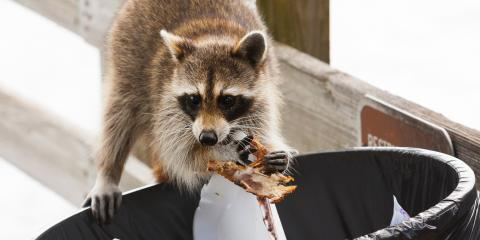 3 Ways to Keep Raccoons Out of Your Trash, Jasmine Estates, Florida