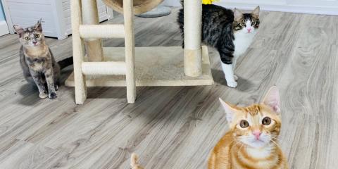 How to Tell If Your Cat Wants a Feline Friend, Honolulu, Hawaii