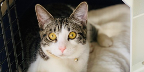 3 Ways to Reduce Your Cat's Stress When They're in a Car, Honolulu, Hawaii