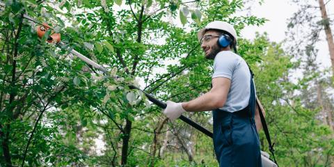 5 Tools to Safely Trim Trees, Elk River, Minnesota