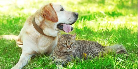 Prairie du Chien Veterinarians Share 5 Summer Safety Tips for Pets, Prairie du Chien, Wisconsin