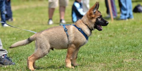 Top 5 Puppy Training Tips, Prairie du Chien, Wisconsin