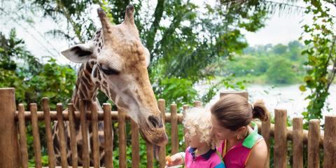 8 Best Summer Vacation Locations to Take Your Children, Henrietta, New York