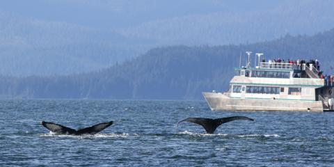 A Month-by-Month Guide to What You'll See on Your Whale Watching Tour , Juneau, Alaska