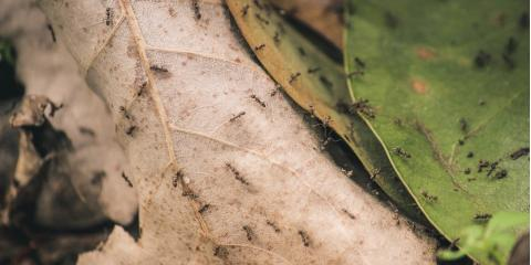 Protect Your Home With These 4 Ant Control Tips, Perry, Georgia