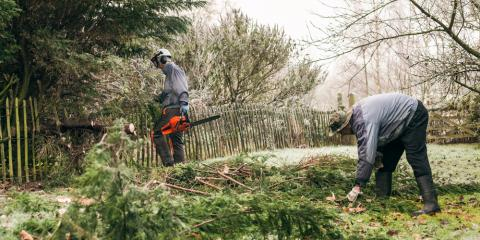 Why Pruning Trees in Fall Is Best, Owings Mills, Maryland