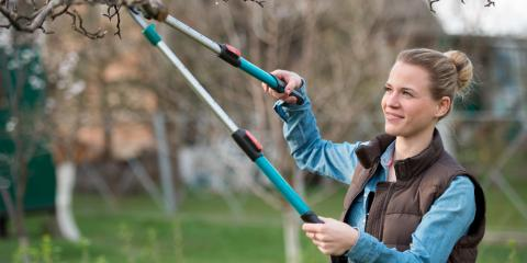 When You Need to Hire a Professional for Pruning Trees, St. Charles, Missouri