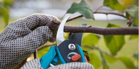 4 Reasons Pruning Trees Is Crucial, St. Charles, Missouri
