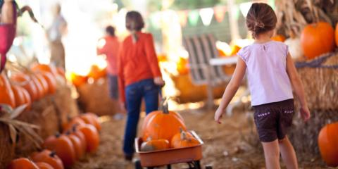 How to Choose the Perfect Pumpkin, Perinton, New York