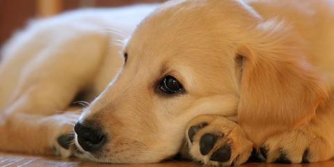 Divorce Lawyer Discusses What Happens to Pets After a Divorce, Elko, Nevada
