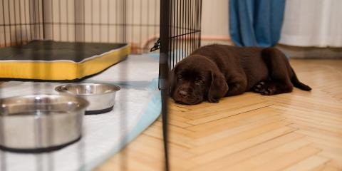 3 Tips for Getting Your Puppy Used to Their Crate, Milford, Connecticut