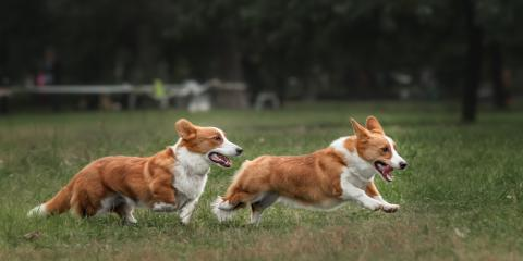 3 Critical Puppy Socialization Mistakes to Avoid, Easton, Connecticut