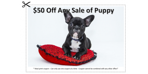 $50 Off Any Sale Of Puppy, Manhattan, New York