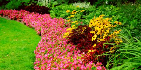 Garden Center Pros Share Tips to Keep Summer Plants Healthy, Quaker City, Ohio