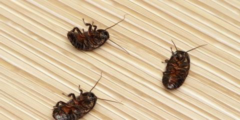 3 Pest Control Tips to Keep Unwelcome Visitors Out of Your Home, Statesboro, Georgia