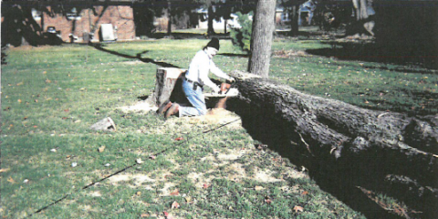 Save Trees And Save Lives With The Help of a Certified Arborist, Dayton, Ohio