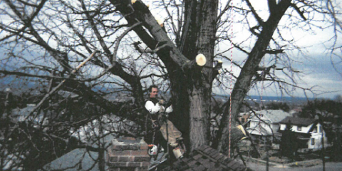 How To Safely And Accurately Accomplish Tree Removal, Dayton, Ohio