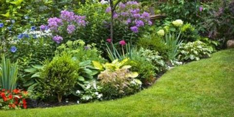 The Importance of Pre-Emergent for Your Lawn's Health, Denver, North Carolina