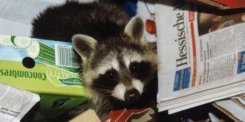 Sharing Your Home With a Pest? Tips From Animal Control Experts, Hebron, Kentucky