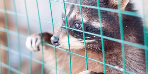 Rodent Control: Why You Should Leave Animal Removal to a Pro, Fayetteville, Tennessee