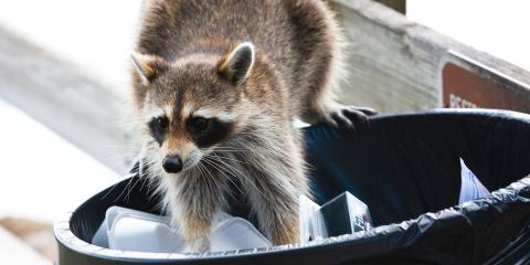 5 Ways to Keep Raccoons out of the Trash , Ogden, New York