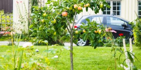 Gardening Experts Explain 4 Reasons to Add Fruit Trees to Your Yard, Robertsdale, Alabama