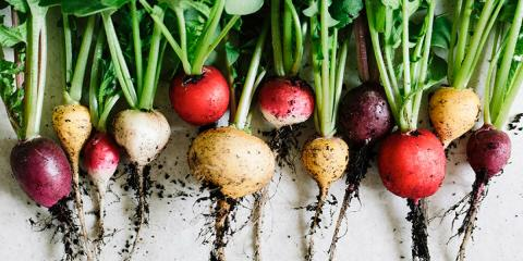 5 Vegetables to Plant in the Early Spring , Holland, Wisconsin
