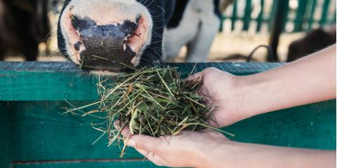 Ragland's Top Feed Store Explains Why Feed Management Is Important, Ragland, Alabama