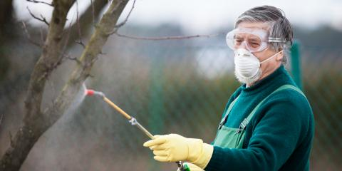 3 Common Tree Diseases, Providence, North Carolina